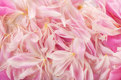 Petals background Royalty Free Stock Image