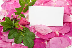 Petals and blank card Stock Photo