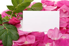 Petals and blank card Royalty Free Stock Image