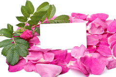 Petals and blank card Royalty Free Stock Images