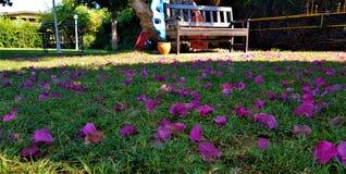 Petals of bougainvillea on grass in garden with playground, family hotel in Kemer, Mediterranean coast, Turkey stock photo