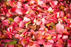 Petals carpet Stock Photo
