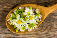 Petals of chamomile in wooden spoon on the old board in the cracks Royalty Free Stock Photos