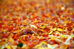 Petals closeup. Yellow and orange petals closeup Royalty Free Stock Images