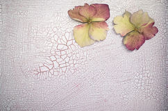 Petals on a crackled paint surface Stock Images