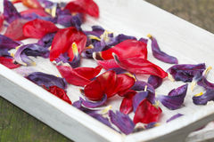Petals are dried, potpourri Royalty Free Stock Photo