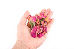 Petals of dried roses in a girls hand on a white background Stock Photography