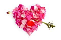 petals för pilblommahjärta arkivbild