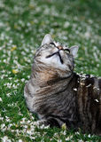 Petals Falling on Cat Stock Photography