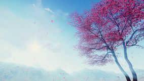Petals falling from flowering sakura tree 4K stock video footage