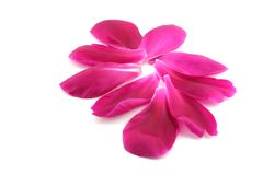 Petals of flower. Stock Images