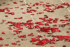 Petals. Flower , american bounty, as in film, on the ground, red , beautifully,  are modified leaves that surround the reproductive parts of flowers royalty free stock photography