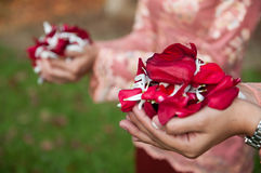 Petals of Flowers in Hands. Petals of roses and mixed with other flowers in hands of young ladies Royalty Free Stock Photo