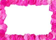 Petals frame. Wild rose petals decorative frame stock images
