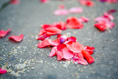 Petals on the ground Royalty Free Stock Images