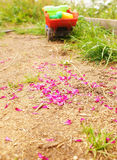 Petals on the ground. Children's car in the background in the garden Royalty Free Stock Photo