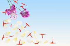 Petals 2H Stock Images