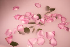 Petals and leaves floating Royalty Free Stock Image