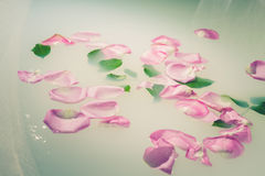 Petals and leaves floating Stock Photo