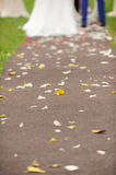 Petals and Leaves on Path Royalty Free Stock Images