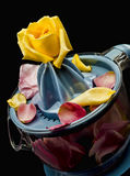 Petals in lemon squeezer Stock Images