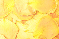 Petals macro background Royalty Free Stock Image