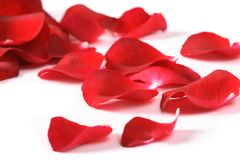 Petals Of A Rose, Royalty Free Stock Photography