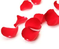 Petals Of Roses Royalty Free Stock Images