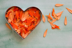 Petals of an orange gerbera daisy. Lying in a heart shaped cookie cutter closeup Stock Photo