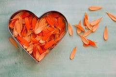 Petals of an orange gerbera daisy Stock Photo