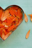 Petals of an orange gerbera daisy. Lying in a heart shaped cookie cutter closeup Stock Images
