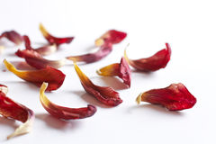 Petals over white Stock Photography