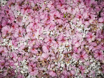 Petals and pebbles background Royalty Free Stock Images