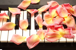 Petals on piano Royalty Free Stock Images