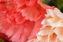 Petals in pink Stock Images