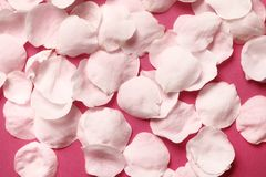 Petals on a pink background royalty free stock photos