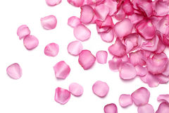 Petals of pink rose royalty free stock photos