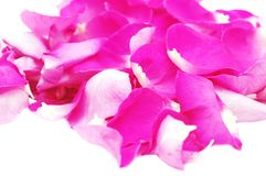 Petals of pink roses,background Royalty Free Stock Image