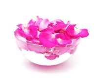 Petals of pink roses in glass bowl with water Royalty Free Stock Image