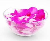 Petals of pink roses in  glass cup Stock Photo