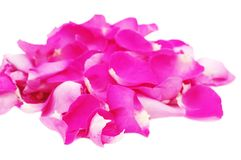 Petals of pink roses on white, isolated Stock Photo