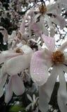 Petals and Raindrops Stock Images