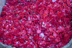 Petals of red color flower Stock Image