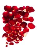 Petals of red rose Stock Photography
