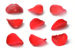 Petals of a red rose isolated. On white background Stock Photo