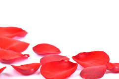 Petals of a red rose isolated Stock Image