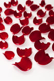 Petals of red rose over white background Stock Photo