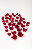 Petals of red rose over white background Royalty Free Stock Photos