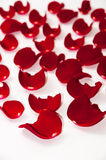 Petals of red rose over white background Royalty Free Stock Image
