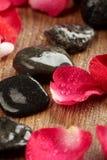 Petals of a rose Stock Photos